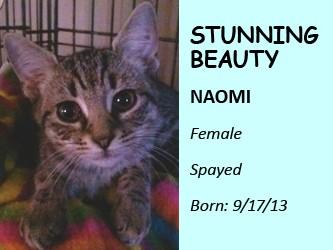 http://tommyshouseinc.org/wp-content/uploads/2013/11/Naomi2.jpg