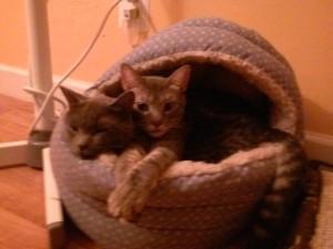 KittensBeasket